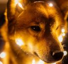 Dogecoin lights